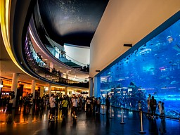 Emirati Arabi Cosa Vedere The Mall Acquario Creek